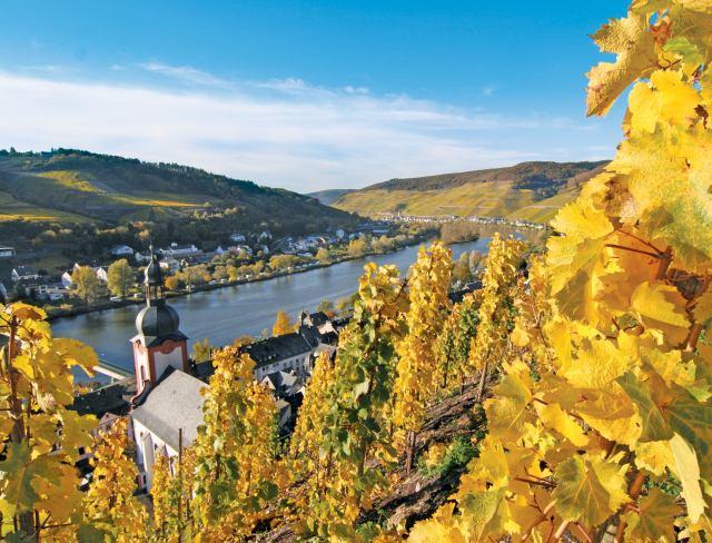WINE GER_Zell vineyards_AMA_GU.jpg